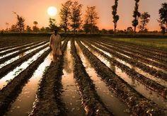 Morning in village of Pakistan
