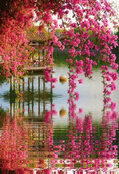 Beautiful Nature Wallpaper, Beautiful Gif, Beautiful Gardens, Beautiful Flowers, Beautiful Places, Nature Gif, Nature Images, Nature Pictures, Landscape Photos