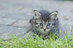 Kitten by Ioana Popovici on 500px