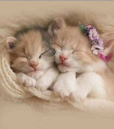 Sleeping kittens - Tap the link now to see all of our cool cat collections!