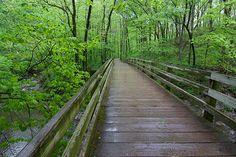 Bridge at Sharon woods Park, Sharonville, Ohio