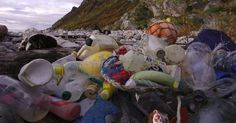 This amounts to a staggering 16 million plastic bottles daily, ending up in landfills or making their way to the ocean.  There are 35.8 million plastic bottles used daily in Britain, but only 19.8 million are recycled. That leaves a shocking 16 million plastic bottles that never reach the recycling bin every single day.
