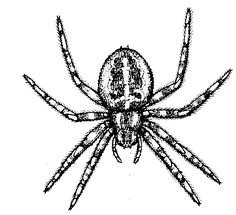 Spiders clipart black and white - ClipartFest
