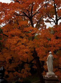 Fall colors at Mount Auburn Cemetery, #CambridgeMA