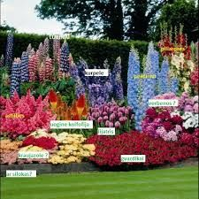 Summer flower all summer flowering perennials garden pinterest find this pin and more on house and around by liveinstyle mightylinksfo