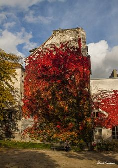 Facade végétale dans le Jardin des Plantes, coté Rue Cuvier, 5e