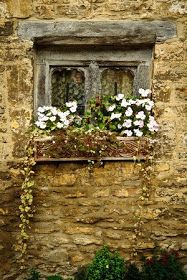 window with white flowers on stone (Classical Homemaking)