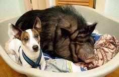 pig in a blanket? OK.  hog the sheet? NOT OK