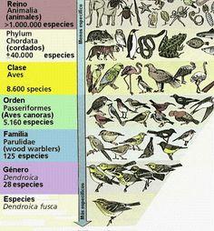 Diversidad biologica I