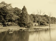 Freeman Lake - Elizabethtown, KY