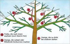 Obstbaumschnitt Illustration