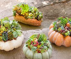 Create a Living Centerpiece: Usher in fall with succulents planted atop pumpkins and squash. They're a fresh, modern alternative to the traditional jack-o'-lantern and provide the perfect centerpiece for any autumn table. Fall Containers, Succulents In Containers, Cacti And Succulents, Planting Succulents, Planting Flowers, Succulent Centerpieces, Succulent Arrangements, Fall Arrangements, Pumpkin Centerpieces