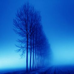 Winter trees in blue