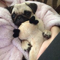 """Ok, I got my stuffy so now I'm ready for my bedtime story!"""