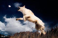 """Snatch"" by meerkat"
