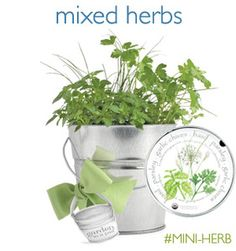 """Organic Mixed Herbs (basil, garlic chives, parsley) Grow fresh and fragrant culinary herbs right in this leak-proofpail. This size will fit right on your windowsill. Includes: recycled US steel pail, organic seed, growing medium, coconut husks for drainage, directions. Mini Pail 5.5"""" high x 6"""" diam.    PRICE:$25.00"""