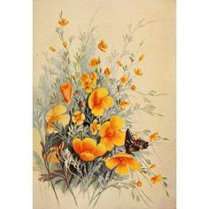 Guide To The Wild Flowers 1899 California Poppy Canvas Art