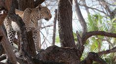 ©Pietro Luraschi|Tanzania