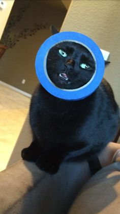 This cat who saw a round object and went for it: | 19 Cats Who Made Poor Life Choices