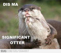 Dis ma significant otter