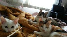 Kassie,  Luna e Cissi.