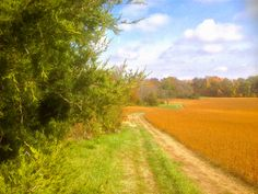 A farm lane meanders into Autumn color near Evansville. Photo courtesy of Christopher Martin. Randolph County, Illinois, Country Roads, River, Autumn, Places, Color, Colour, Lugares