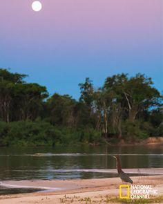 Quais os mistérios que se escondem por trás deste paraíso selvagem? Brasil Secreto, Pantanal. #NatGeo Confira conteúdo exclusivo no www.foxplay.com