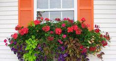 ¿Cómo armar una jardinera para la ventana?