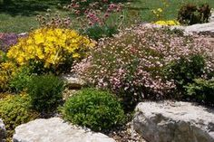 Stones and plants: a match made in heaven. Browse these ideas for incorporating stone into your landscape: https://www.thespruce.com/landscaping-with-rocks-4126709