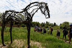 Fifteen life-size bronze sculptures by Deborah Butterfield are included in a new outdoor exhibit at the Denver Botanic Gardens. (Callaghan O'Hare, The Denver Post)