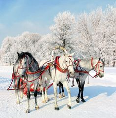 "A troika (Russian: тройка, ""triplet"" or ""trio"") is a traditional Russian harness driving combination, using three horses abreast, usually pulling a sleigh. It differs from most other three-horse combinations in that the horses are harnessed abreast. The middle horse is usually harnessed in a horse collar and shaft bow; the side horses are usually in breastcollar harness."