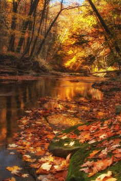 """~ Autumn ~ """"the fallen leaves in the forest seemed to make even the ground glow and burn with light"""" ~ Malcolm Lowry, October Ferry To Gabriola"""