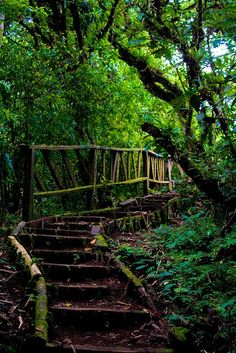 Mombacho Cloud Forest, Nicaragua http://www.travelbrochures.org/189/central-america-and-the-caribbean/rejuvenate-in-nicaragua