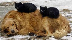 6-2 Katter tupplurar7