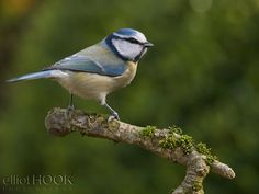 The Importance of 'Enough' Depth of Field in Wildlife Photography - Digital Photography School