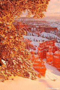 Winter, Bryce National Park, Utah