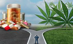 Chronic Pain and the Therapeutic Effects of Medical Cannabis