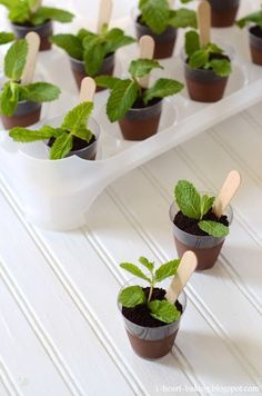 """For garden party.PLANT DESSERT: chocolate mousse/pudding """"soil"""" + oreo crumbs """"dirt"""" + mint leaf """"plant"""" + wooden spoon """"plant labeller""""here Chocolate Pudding, Dessert Chocolate, Chocolate Cream, Chocolate Soil, Chocolate Cups, Decadent Chocolate, Snacks Für Party, 31 Party, Wedding Desserts"""