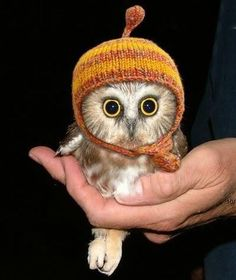 It's an owl. wearing a hat. An owl is wearing a hat. Oh gosh. This owl is wearing a hat! Cute Baby Owl, Baby Owls, Cute Baby Animals, Cute Babies, Funny Animals, Baby Baby, Wild Animals, Owl Babies, Nocturnal Animals