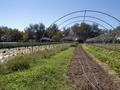 Veganic is the New Permaculture