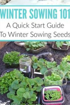 Gardening Tips and Ideas that Actually Work flower gardening tips for beginners gardening ideas for beginners home gardening ideas gardening hacks top 10 gardening tips Beginners Gardening, Gardening Hacks, Flower Gardening, Vegetable Garden Tips, Starting A Vegetable Garden, Amazing Gardens, Garden Ideas, Seeds, Home And Garden