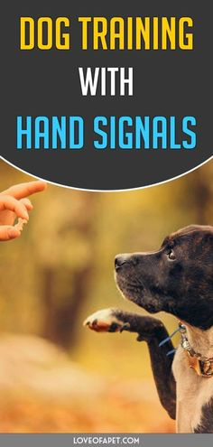 How To Know If Your Dog Needs… #dogtrainer Therapy Dog Training, Service Dog Training, Puppy Training Tips, Dog Training Videos, Training Your Puppy, Therapy Dogs, Service Dogs, Potty Training, Training Classes