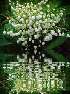 Lily of the Valley Cottage Amazing Flowers, Beautiful Roses, Beautiful Gardens, White Flowers, Beautiful Flowers, Lily Of The Valley Bouquet, Frühling Wallpaper, May Birth Flowers, Flowers Gif