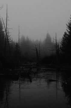 Dark forest, glow of the lake, an eternal dance of death Landscape Photography, Nature Photography, Dance Of Death, Slytherin Aesthetic, Nature Aesthetic, Destin, Dark Forest, Aesthetic Wallpapers, Mother Nature