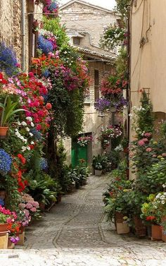 Flowered Lane, Spello, Umbria, Italy SH: What a beautiful, magical place! I just *know* somewhere along that lane is a bench where I could sit dreaming for hours!