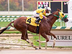 """Rapid Redux - a """"blue collar"""" hero, champion of the unheralded backbone of American racing.  The gelding who won 22 straight races and was honored with a Special Eclipse Award retired May 2012."""