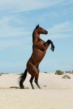 horse ranch life