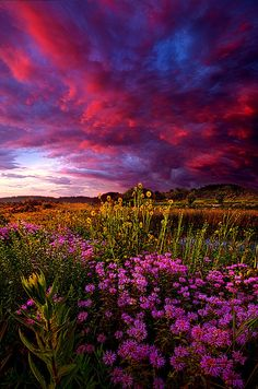 Twilight Photograph - Life Love And Hope by Phil Koch