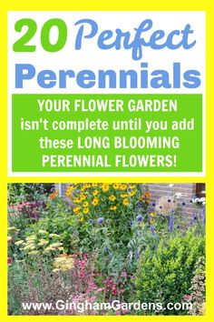 Classic Perennial Flowers are those that live longer that 2 years. They have a long bloom time, are easy to grow and get bigger and better every year. The Best Perennial Flowers that every garden needs. #perennialflowerslist #perennialflowersforsun Perennial Flowers List, Long Blooming Perennials, Best Perennials, Flowers Perennials, Shade Perennials, List Of Flowers, Annual Flowers, Cut Flowers, Shade Garden