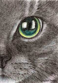 Original ACEO cat drawing OOAK a black cat lover by JingfenHwu, realistic, art, green eyes, cat face, aqua color pencil, watercolor, #jingfenhwu